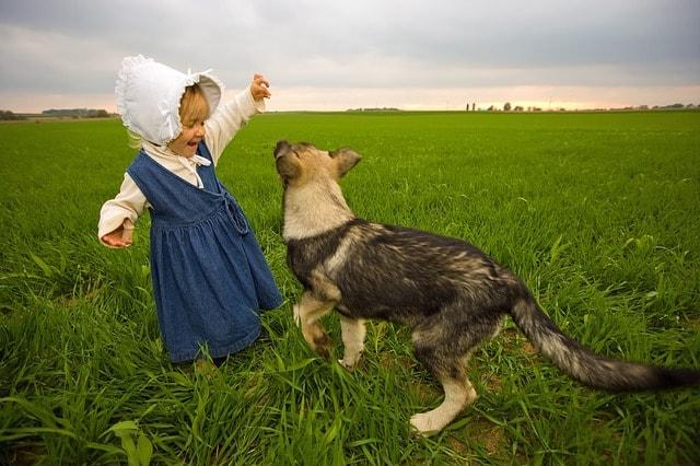 dog pet working